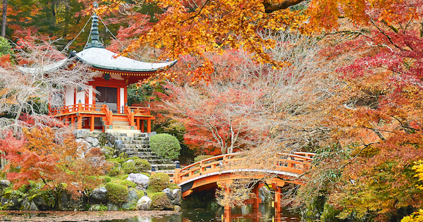 C mo son los jardines japoneses for Biombo exterior para jardin