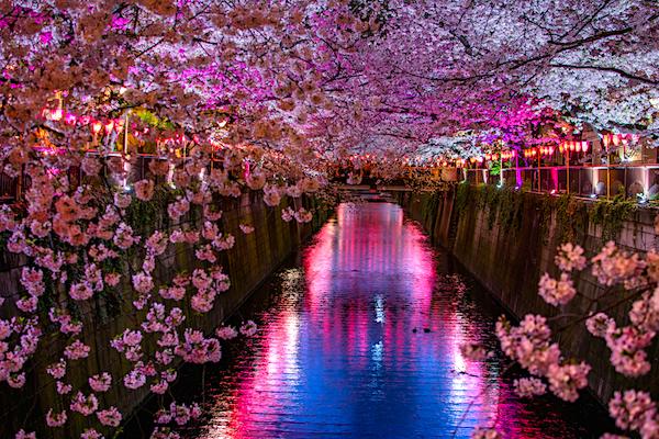 jardines japoneses cerezos